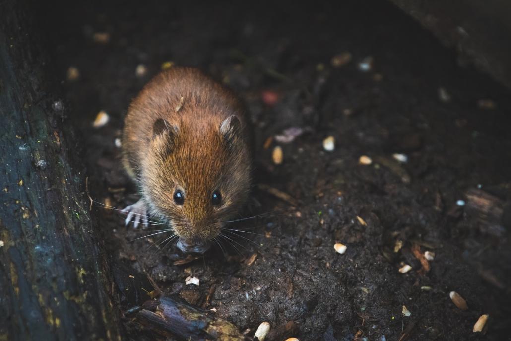 Genoeg Muizen in huis: hoe kun je muizen bestrijden? – Het leukste woon blog IV92